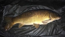 a winter common carp